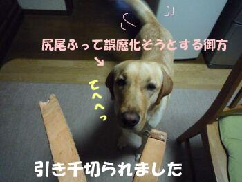 P1070388-a.jpg