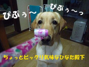 P1070697-a.jpg