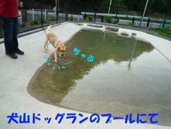 P1070857-a.jpg