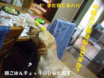 P1070950-a.jpg