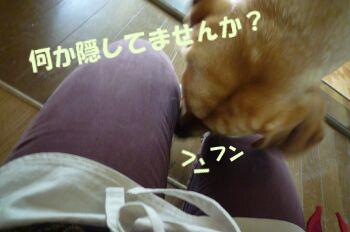 P1090010-a.jpg