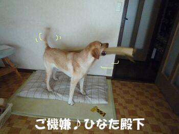 P1090061-a.jpg