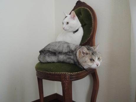 3月31日 プー次郎とハナ子3