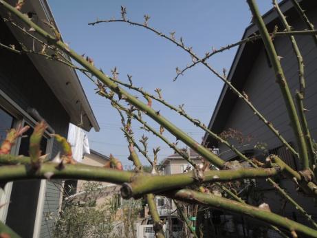 4月2日 新雪