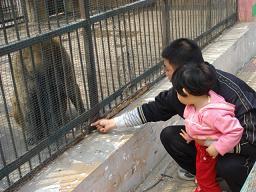 サルにえさやり