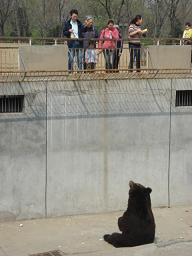 熊にえさやり