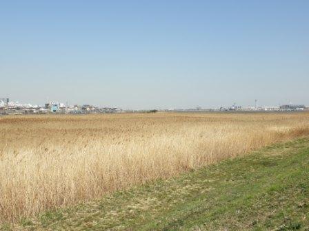 多摩川川原3月15日
