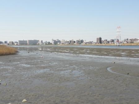 多摩川湿地3月15日