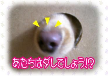 ダレのお鼻!?