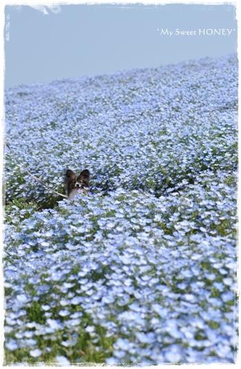 DSC_6366-crop.jpg