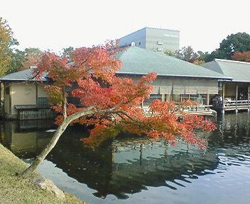 momiji2008