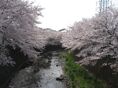 25恩田川5