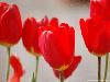 flower001s.jpg
