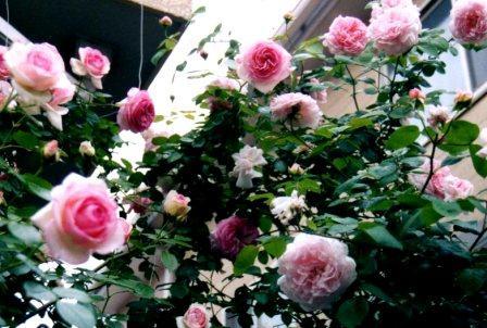 masako035_20071213104006.jpg