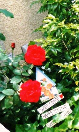 red027.jpg