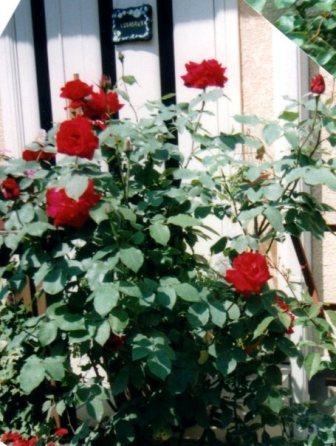 red028.jpg