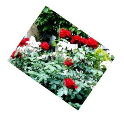 red029.jpg