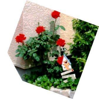red030.jpg