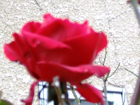 redbara1.jpg