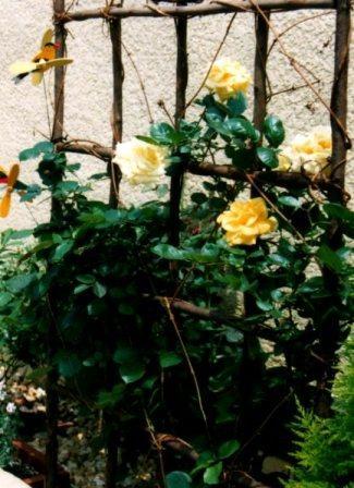 yellow023.jpg