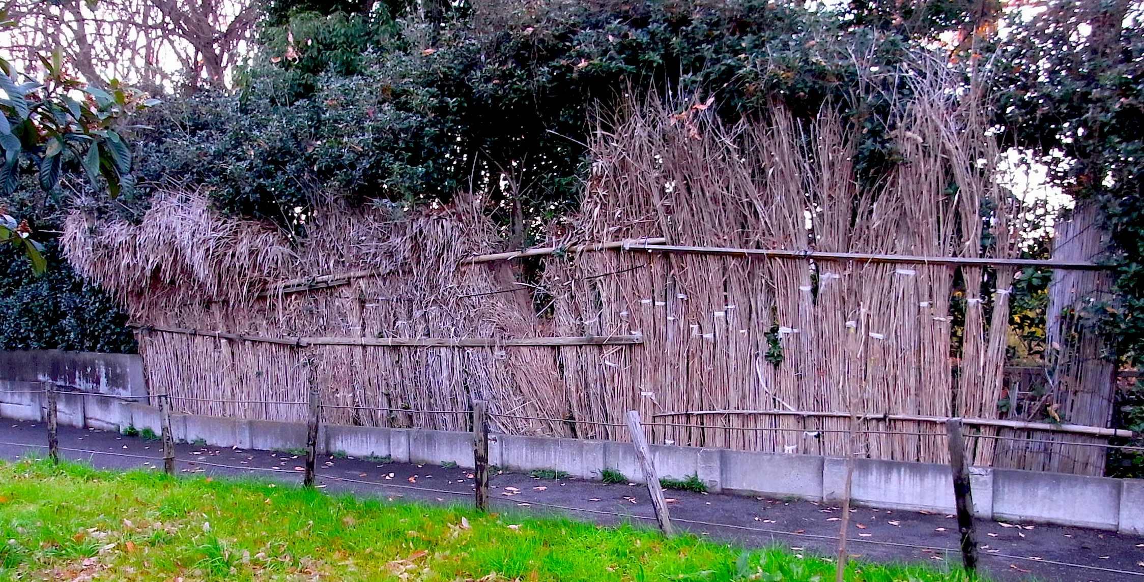 清瀬市せせらぎ公園ススキ刈り、昨年作ったホタルのためのススキの光避け