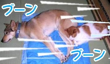 y06_05_25-2.jpg