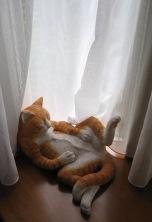 我が家の猫6.30 001