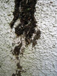 蟻の巣 004