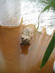我が家の猫7.1 086
