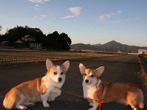 夕方の散歩2008-1111-1