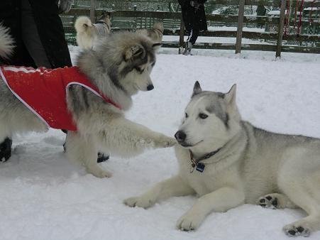 雪遊び17