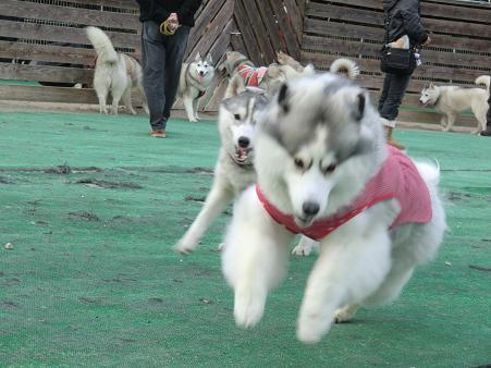 同犬種12