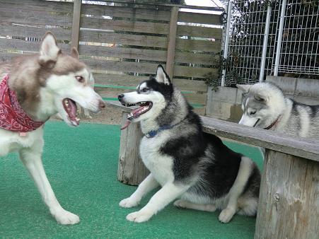 同犬種10