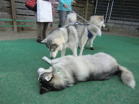 同犬種18