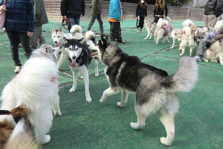 同犬種17