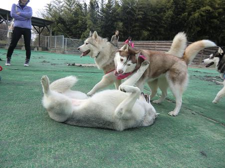 同犬種15