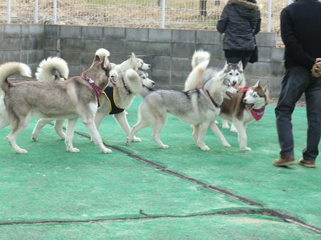 同犬種13