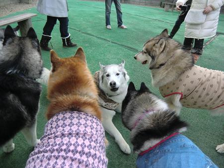 同犬種23