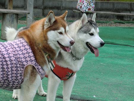 同犬種24