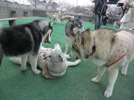 同犬種22
