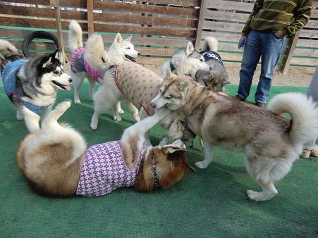 同犬種19