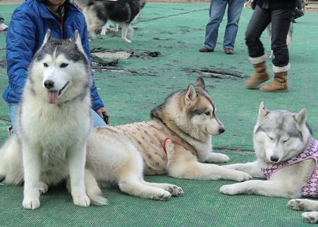 同犬種21