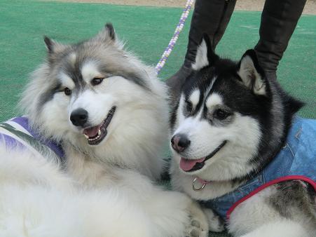 同犬種25