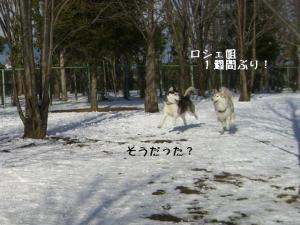 200901乗鞍 158