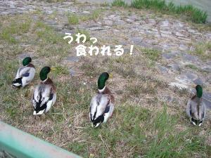 2009春 さくら 0154