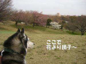 2009春 さくら 0228