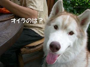 200904 鬱花 00805