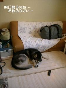 CIMG463626.jpg
