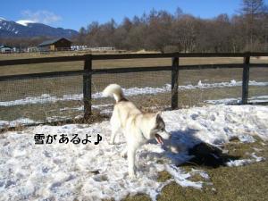 CIMG465533.jpg