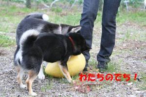 IMG_44012_800.jpg